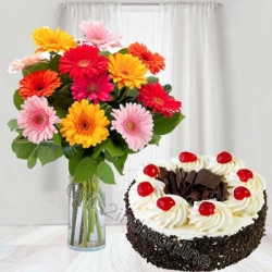 Multicolored Gerbera Bouquet And Black Forest Cake