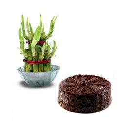 Chocolate Cake And Lucky Bamboo Combo