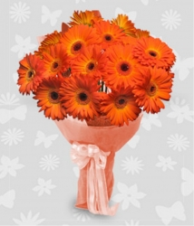 Orange Gerbera Bunch