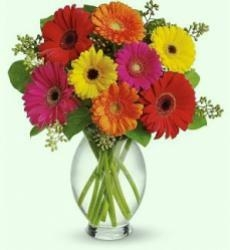 Mixed Color Gerbera  Bouquet