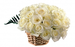 Basket Arrangement Of White Roses
