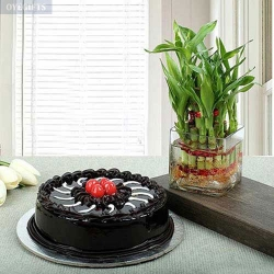 Chocolate Truffle Cake N 3 Layer Bamboo