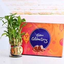 Cadbury Celebration & Lucky Bamboo