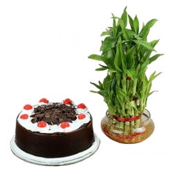 Lucky Bamboo  Black Forest Cake