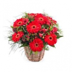 30 Red Gerbera Dasies Bouquet