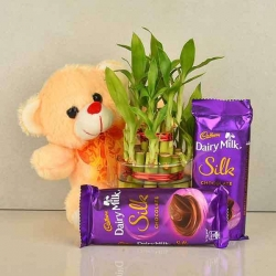 Combo Gifts Of Plants Teddy And Chocolate
