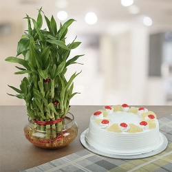 Pineapple Cake And 2 Layer Lucky Bamboo Plant