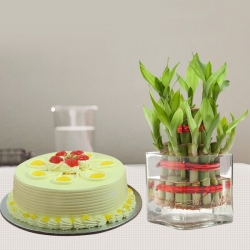 2 Layer Bamboo Plant And Butterscotch Cake