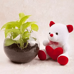 Money Plant And Teddy Combo Gift