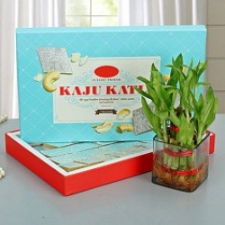 2 Layer Lucky Bamboo And Kaju Katli
