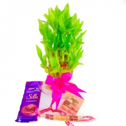 Rakhi And 2 Layer Lucky Bamboo