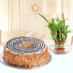 Bamboo Plant Butterscotch Cake