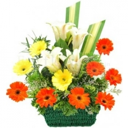 White Lilies Gerbera Basket Arrangement