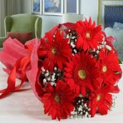 15 Red Gerbera  Daisies Bouquet