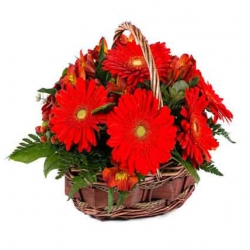 Red Gerbera Daisies Bouquet