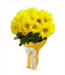 12 Yellow Gerbera Daisies Bunch