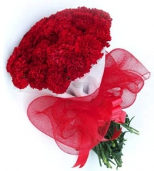 24 Red  Carnation  Bouquet