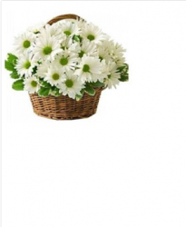 35 White Gerbera Daisies Bouquet