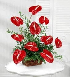 Anthurium Basket Arrangement