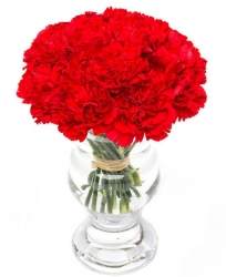 Red Carnation In Vase