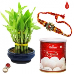 Bamboo Plant With Rakhi And Sweets