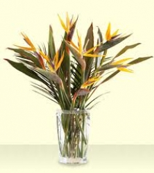 Floral Arrangement Of Bird Of Paradise