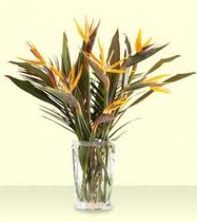 Floral Arrangement Of Bird Of Paradise