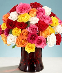 Multicolored Rose In A Vase