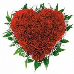 Carnation Heart Shape