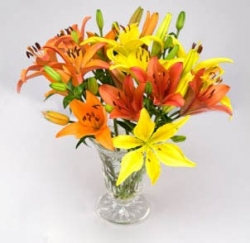 Multicolored Lilies Bouquet