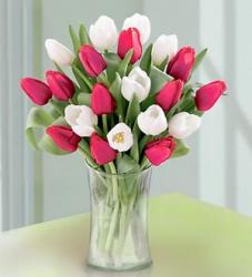 Tulip Special