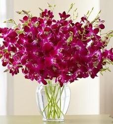 Orchids Flowers Bouquet