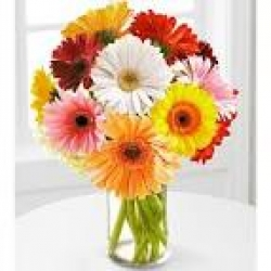 Bright Gerbera In Vase
