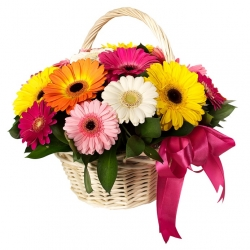 Multi Color Gerbera Daisies Bouquet