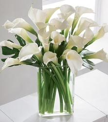 White Calla Lily In Vase
